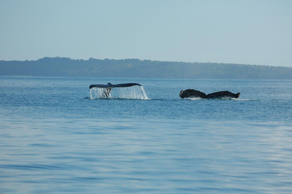 Whales Nosy be-Madagascar holidays