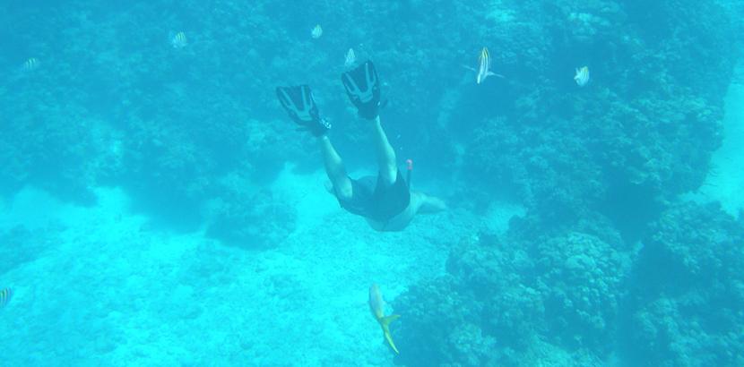 dive-safari-nosy-be-gallery - Madagascar holidays