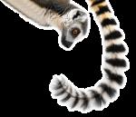 Dhow trip Nosy Be-Madagascar holidays