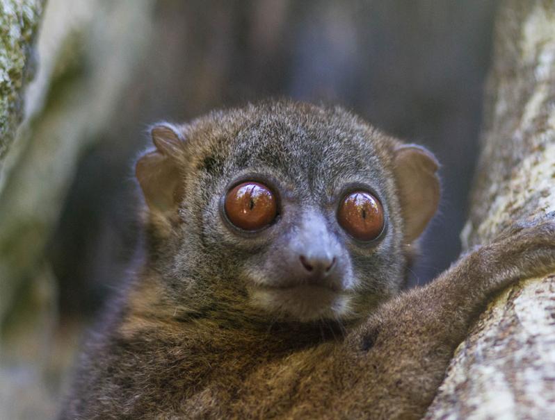 Lemurs-Madagascar holidays