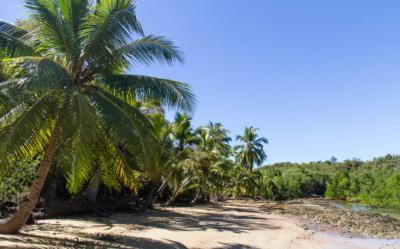 Ecotourism in Madagascar - Trees