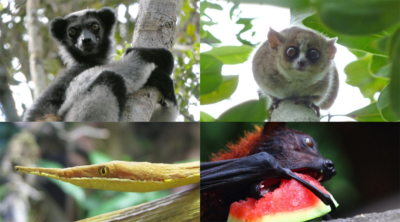 Weird and Wacky Wildlife of Madagascar