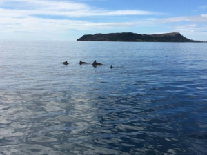 Dolphins in Madagascar L'Ange Blue - The Blue Angel