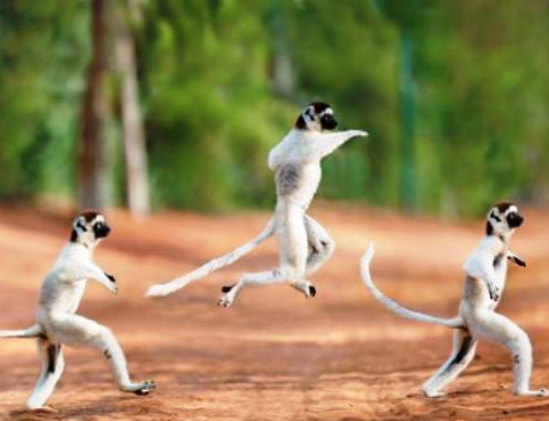 Beach and Lemur package Madagascar
