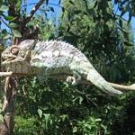 Madagascar Lemur Park - Chameleon