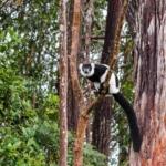 Madagascar Lemur Park - Lemur
