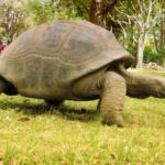 Madagascar Lemur Park - Tortoise